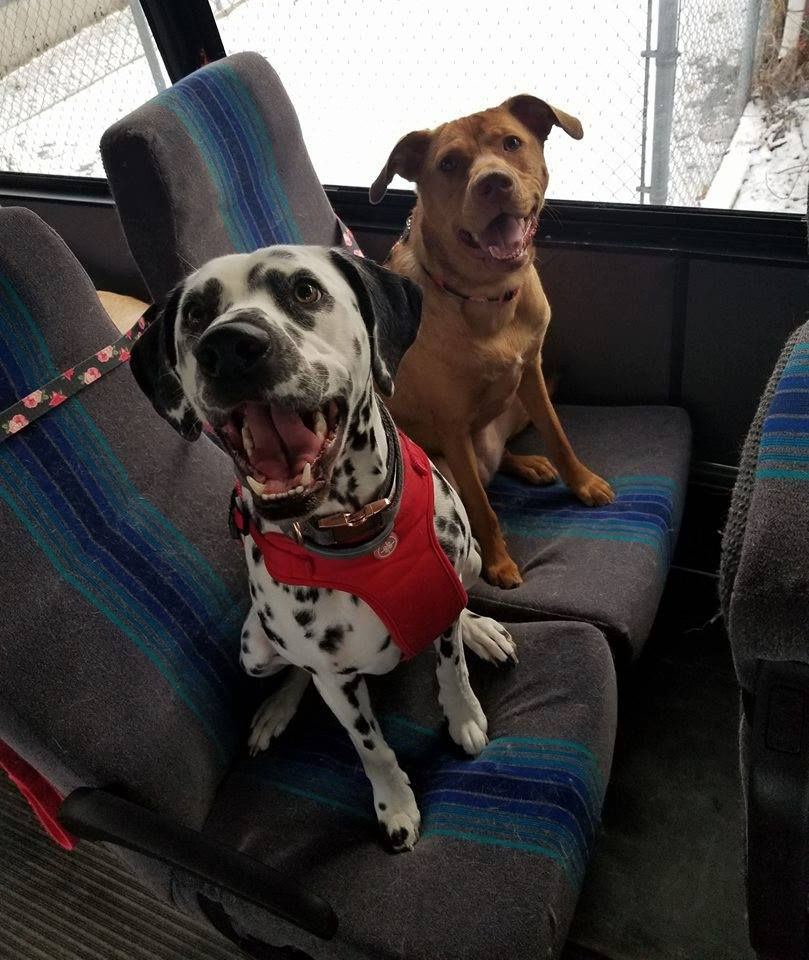 dogs on a bus